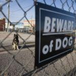 Beware of dog sign: Lorenzo & Lorenzo Premises Liability Blog